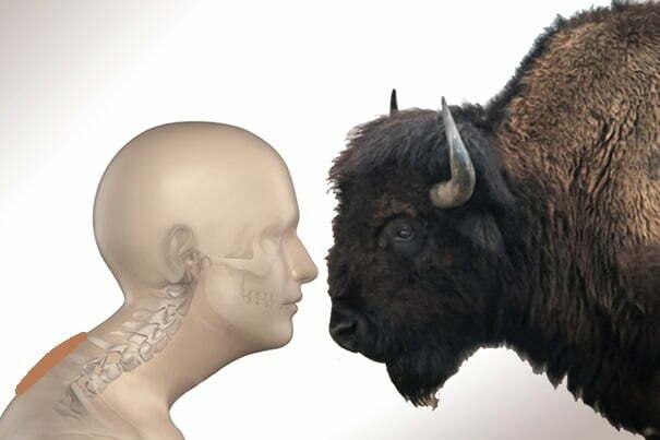Bosse de Bison