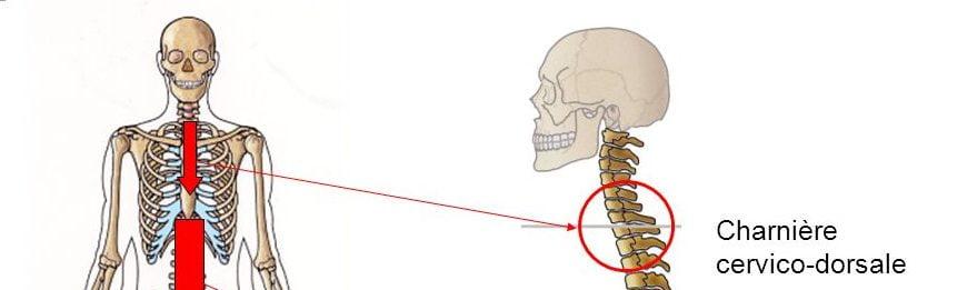 Charnière cervico-dorsale